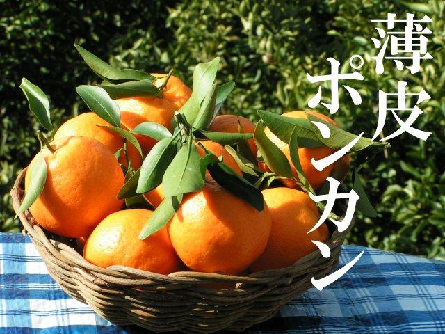 樹熟早生ポンカン(薄皮系)小玉(Mサイズ)5キロ