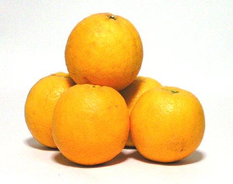 バレンシアオレンジ Lサイズ(中 玉)5.0kg